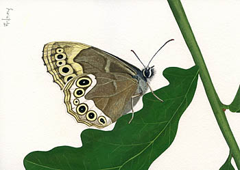 Woodland Brown by Maria Pinta.