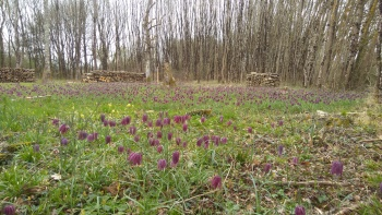 La Touche Fritillaries March 2017