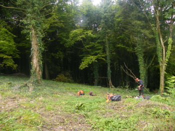 Day one - a dark and inhospitable woodland habitat!