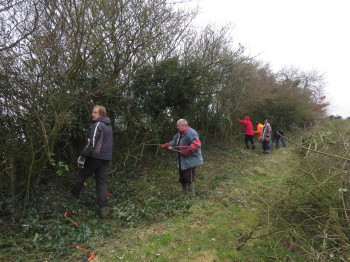 Hedgelaying-3