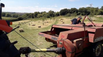 Haymaking on the Terraces 22.7.20 .3