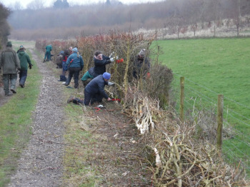 Hedgelaying course 1