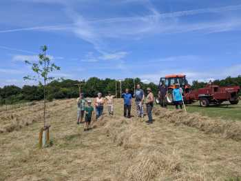 Haymaking on the Terraces 22.7.20